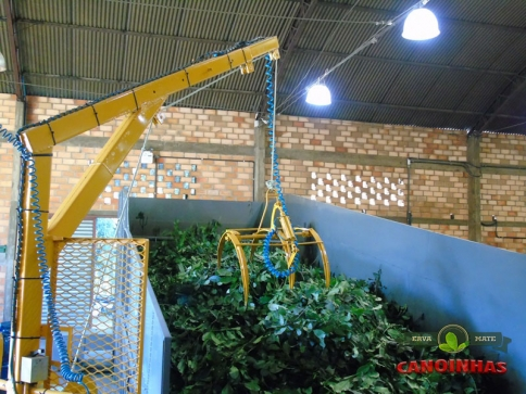 Processamento de erva-mate na fábrica.