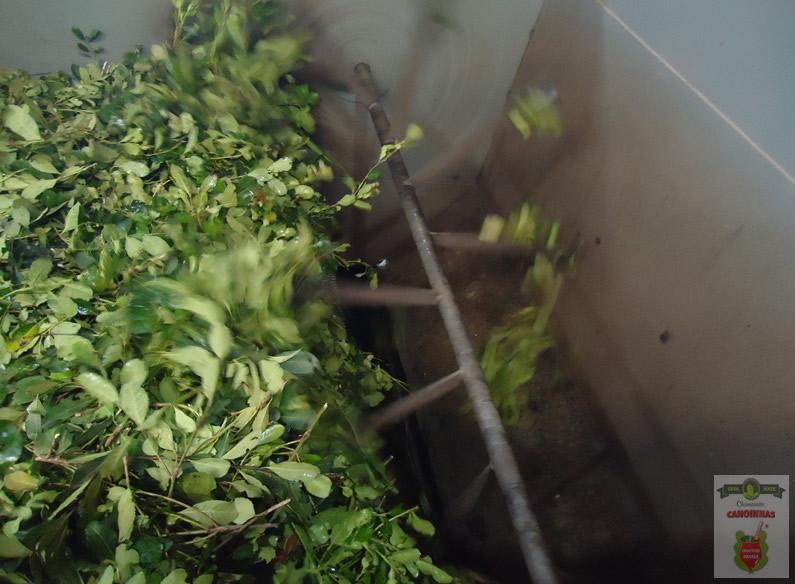 Esteira alimentadora das folhas