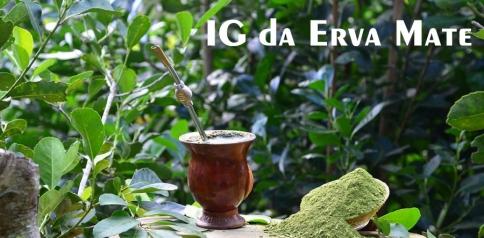 Epagri está finalizando processo para solicitação de IG da erva-mate do Planalto Norte